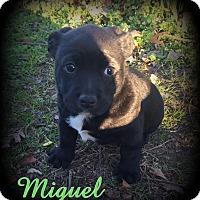 Adopt A Pet :: Miguel - Denver, NC