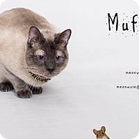 Adopt A Pet :: Muffin - Orange, CA