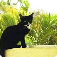 Adopt A Pet :: Duncan - St. James City, FL