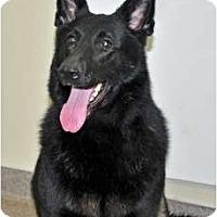 Adopt A Pet :: Bell - Port Washington, NY