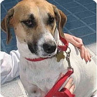 Foxhound Mix Dog for adoption in Richmond, Virginia - Sweet Pea