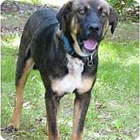 Adopt A Pet :: Tucson - Mocksville, NC