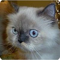 Adopt A Pet :: Muffy - Beverly Hills, CA