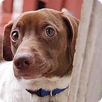 Adopt A Pet :: Louie - San Francisco, CA