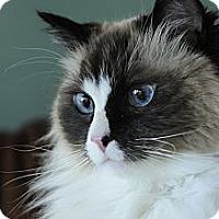 Adopt A Pet :: Marley - Columbus, OH