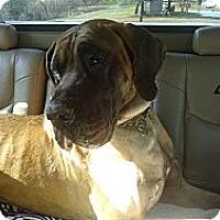 Adopt A Pet :: Norman - Winchester, VA