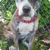 Adopt A Pet :: Hero - Gary, IN