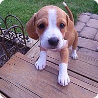 Adopt A Pet :: Bernadette - Homewood, AL