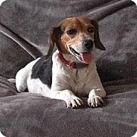 Adopt A Pet :: Holly - Marlton, NJ