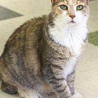 Adopt A Pet :: Linda - St Louis, MO