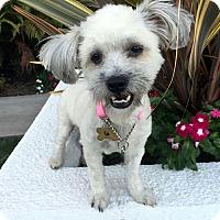 Adopt A Pet :: WINDY - Los Angeles, CA
