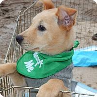 Adopt A Pet :: Emerald - San Diego, CA