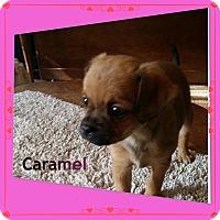 Adopt A Pet :: CARAMEL - Rancho Cucamonga, CA