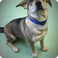 Adopt A Pet :: Espírito - Gadsden, AL