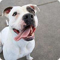 Adopt A Pet :: Tansy - Chula Vista, CA
