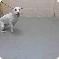 Adopt A Pet :: MYSTERY - Conroe, TX