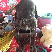 Adopt A Pet :: Paris - springtown, TX