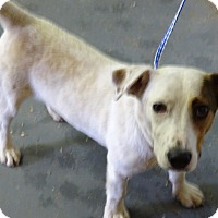 Adopt A Pet :: Crinkle - Delaware, OH