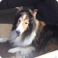 Adopt A Pet :: Darling - McKinney, TX