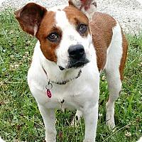 Adopt A Pet :: Bridget - Macomb, IL