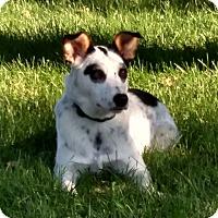 Adopt A Pet :: Lily - Minneapolis, MN