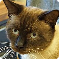 Adopt A Pet :: Desmond - Sprakers, NY
