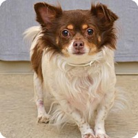 Adopt A Pet :: Tex - Kettering, OH