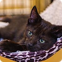 Adopt A Pet :: A..  Ferguson - Mooresville, NC