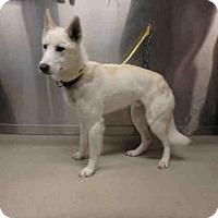 Adopt A Pet :: *TED - Fairbanks, AK