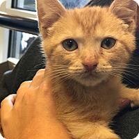 Adopt A Pet :: Otto - Atlanta, GA