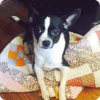 Adopt A Pet :: Gracie - CUMMING, GA