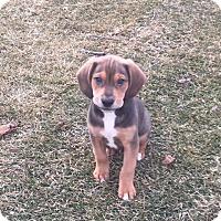 Adopt A Pet :: Tehal - Hainesville, IL