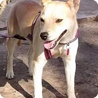 Adopt A Pet :: ANAHI - Poway, CA