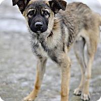 Adopt A Pet :: Ryder - Midland, MI