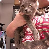 Adopt A Pet :: Princess - Paducah, KY