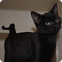 Adopt A Pet :: Dove - Savannah, GA
