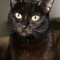 Adopt A Pet :: Leila - Los Angeles, CA