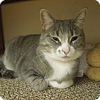 Adopt A Pet :: Pinky - Medina, OH