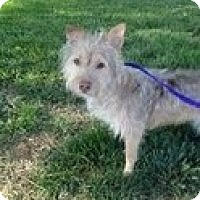 Adopt A Pet :: CAFE - Valley Village, CA