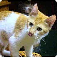 Adopt A Pet :: Newman2 - Bonita Springs, FL