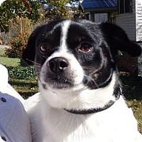 Adopt A Pet :: Digby ($150 off) - Brattleboro, VT