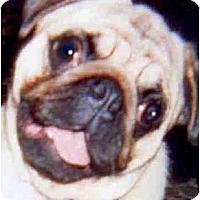 Adopt A Pet :: Poppie - Mays Landing, NJ