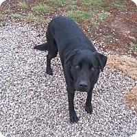 Adopt A Pet :: Duke - Russellville, KY