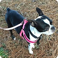 Adopt A Pet :: Anna - Hampton, VA
