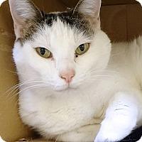 Adopt A Pet :: Bailey - St. Paul, MN