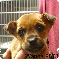 Adopt A Pet :: Wanda - baltimore, MD