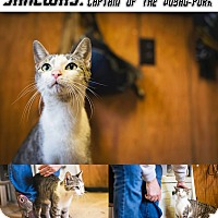 Adopt A Pet :: Janeway NO FEE Glow Kitty - Fredericksburg, VA