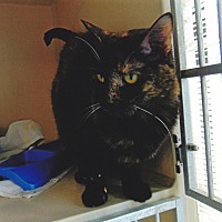 Adopt A Pet :: Allie - Colorado Springs, CO