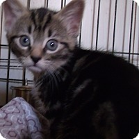 Adopt A Pet :: KEELYN - Acme, PA