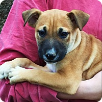 Adopt A Pet :: DAVEN - adorable - Stamford, CT